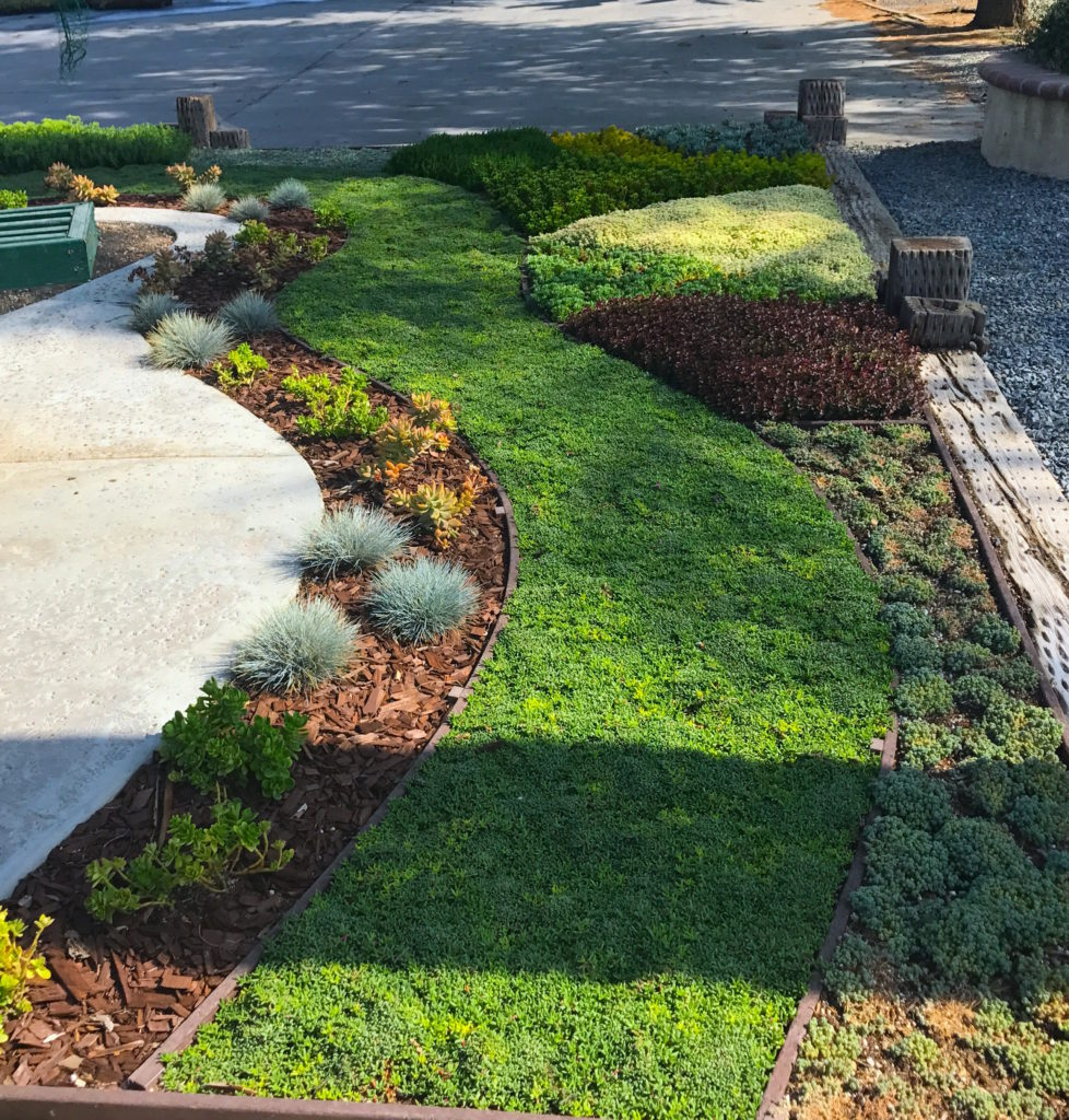 Low Maintenance Drought-Tolerant Ground Cover
