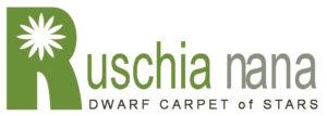 Ruschia lineolata 'Nana' PPAF, Dwarf Carpet of Stars