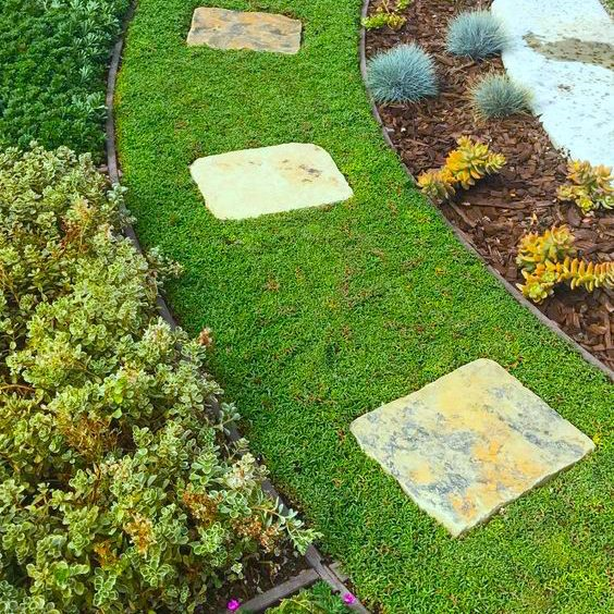 The vibrant green of Ruschia Lineolata is preferred by landscapers.